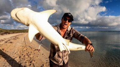 FOOD CHAIN FISHING CHALLENGE - tiny shrimp into HUGE SHARK. EP 69