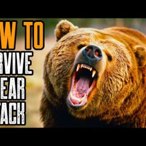 HOW TO SURVIVE A BEAR ATTACK | BEST TIPS TO SURVIVE A GRIZZLY BEAR ATTACK